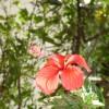Red_Flower_by_noahz