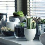 Plantas para decorar apartamento? Sim, é possível!