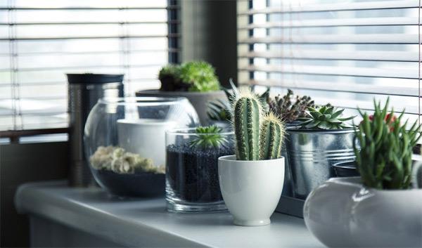 Como decorar o apartamento com plantas