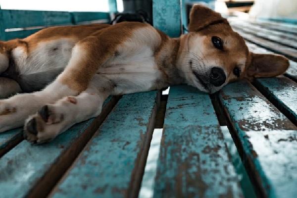 5 sinais que seu cachorro pode estar doente